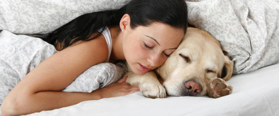 young woman and Labrador Retriever - sleeping in bed