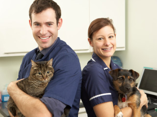 Male Veterinary Surgeon And Nurse Holding Cat And Dog In Surgery